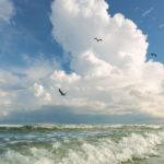 3_Gull_Cloud