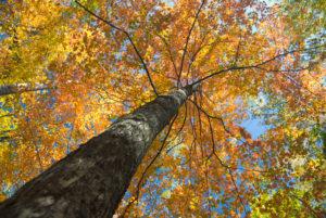 Autumn Up