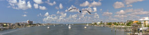 Causeway Gull