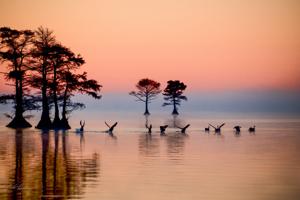 Edenton Bay Dawn