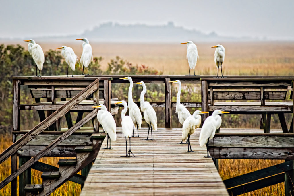Egret Board Meeting