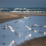 Floating_Gulls