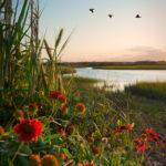 Flower_Marsh
