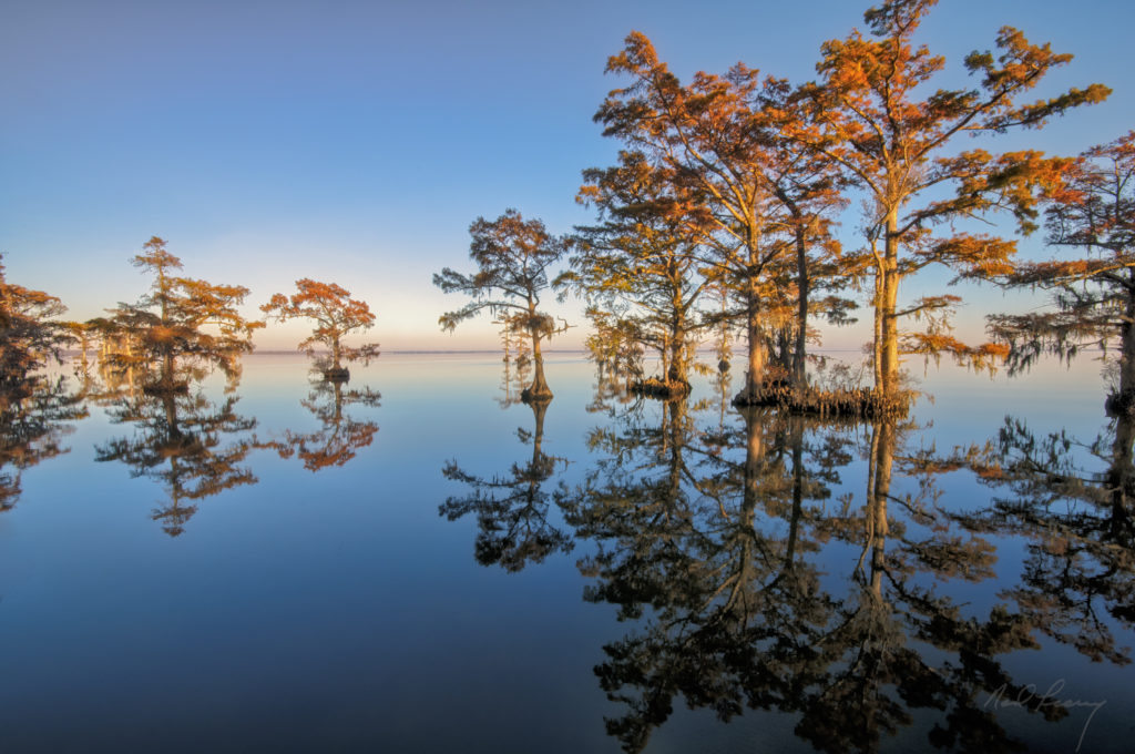 Mirrored Cypress