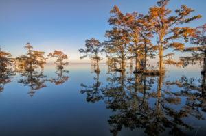 Mirrored Cypress