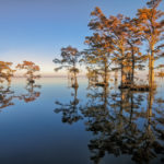 Mirrored_Cypress