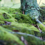 Mossy_Trunk