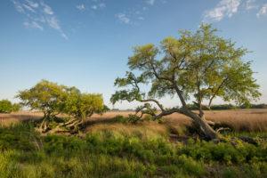 Oak Marsh