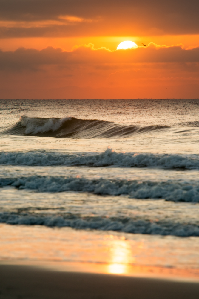 One Gull Sunrise