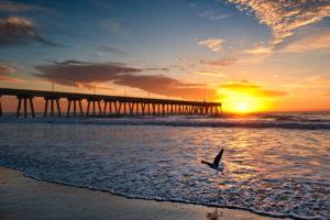 One gull dawn