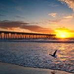 One_gull_dawn