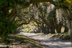Orton Path 2