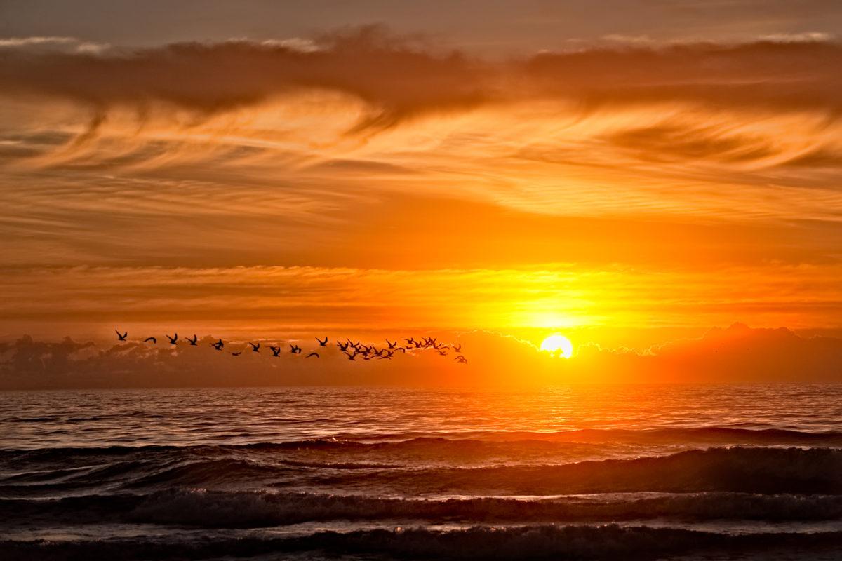 Skimmer Dawn