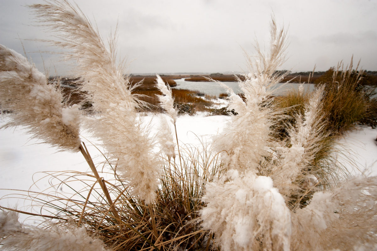 Snow Oats