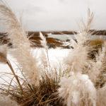 Snow_Oats