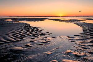 Two Skimmer Sunrise
